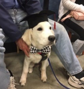 Andro family dog with a graduation cap on and houndstooth collar